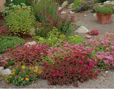 Xeriscaping - replacing water hungry plants with drought-resistant ones!